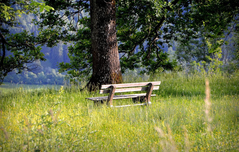 Photo wallpaper grass, tree, relax, bench