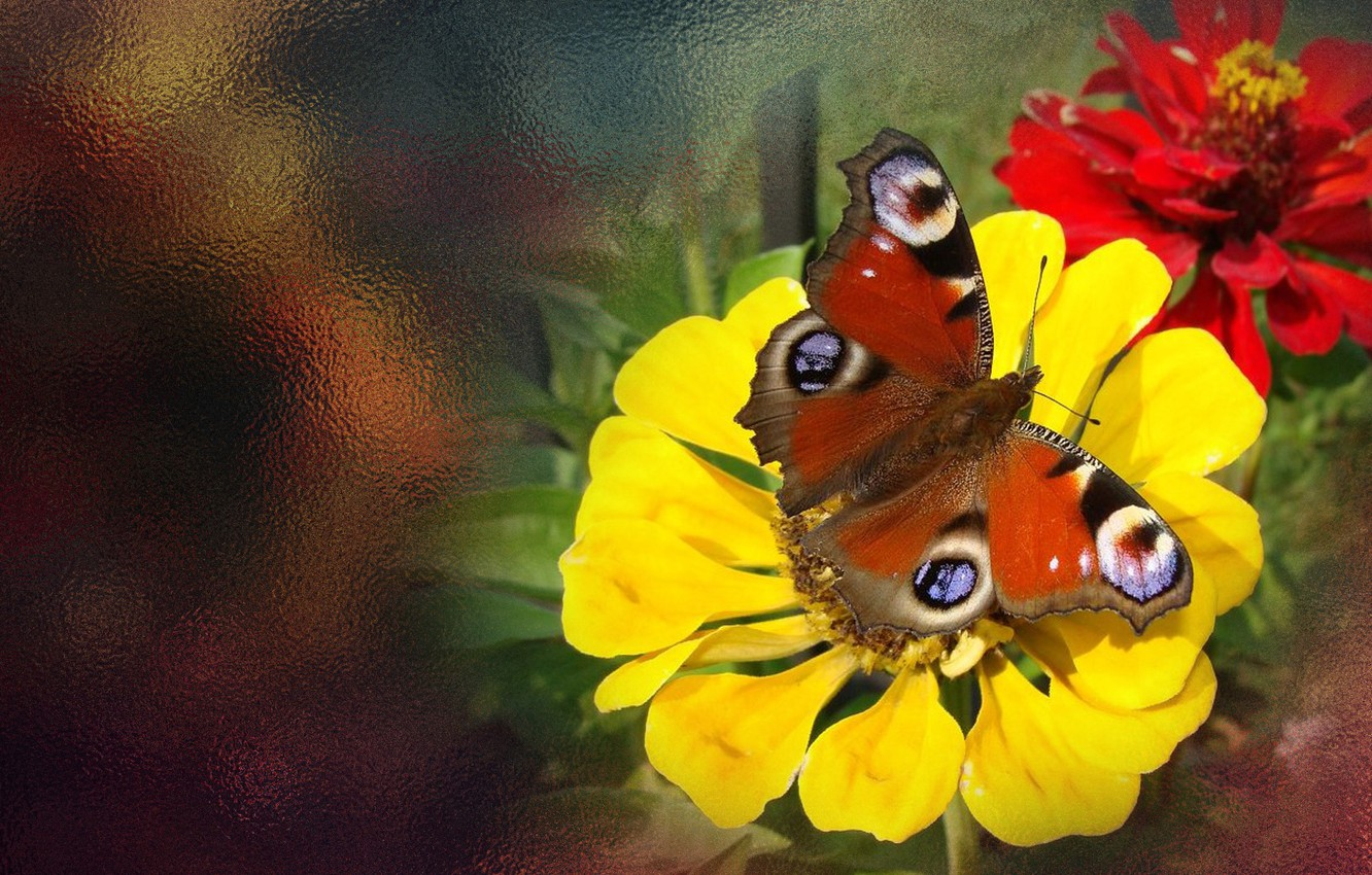 Photo wallpaper summer, flowers, butterfly, the Wallpapers, author's photo by Elena Anikina