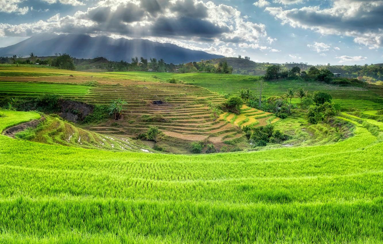 Photo wallpaper rice fields, Philippines, Canlaon