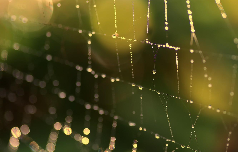 Photo wallpaper macro, background, web