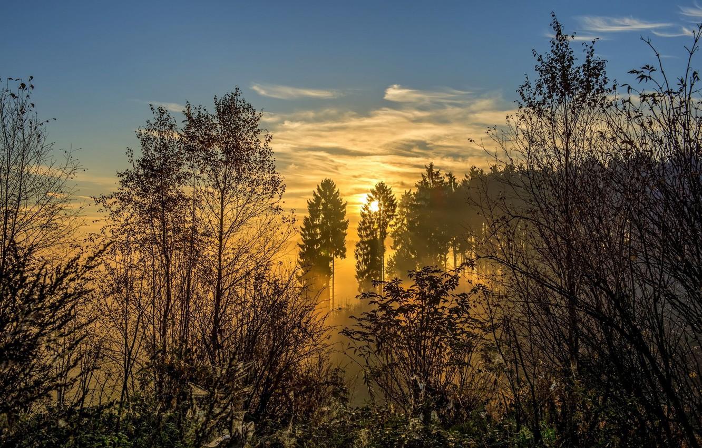 Photo wallpaper forest, the sun, landscape, nature, fog, sunrise, beauty, morning