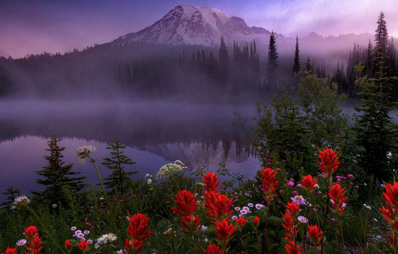 Photo wallpaper trees, landscape, flowers, nature, fog, lake, vegetation, mountain, morning, the volcano, USA, grass, national Park, …