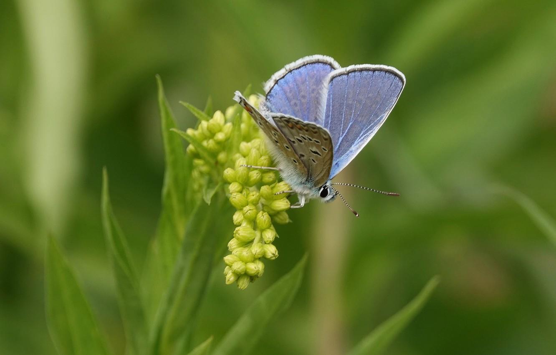 Photo wallpaper butterfly, butterfly, bokeh