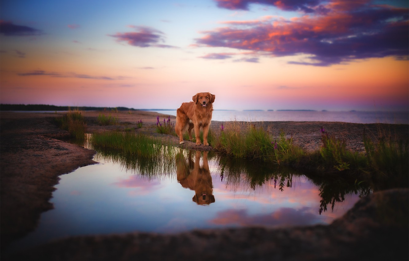 Photo wallpaper nature, reflection, dog, pond