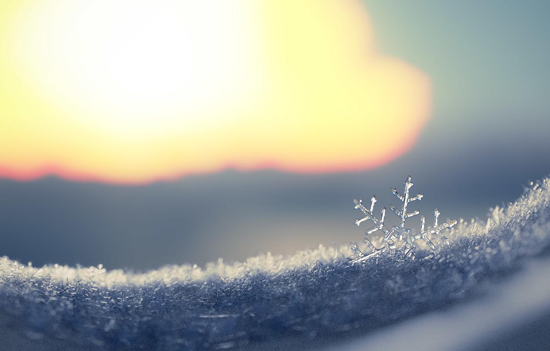 Photo wallpaper winter, snow, rendering, art, snowflake, Snowflake, Fernando Antiqueira
