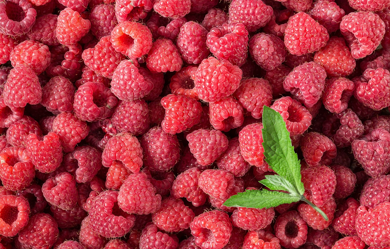 Photo wallpaper berries, raspberry, background, red, fresh, background, berries, raspberry