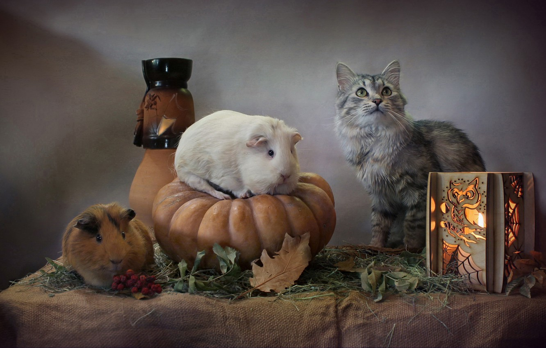 Photo wallpaper cat, leaves, lantern, pumpkin, Halloween, Guinea pigs, Svetlana Kovaleva, Нalloween