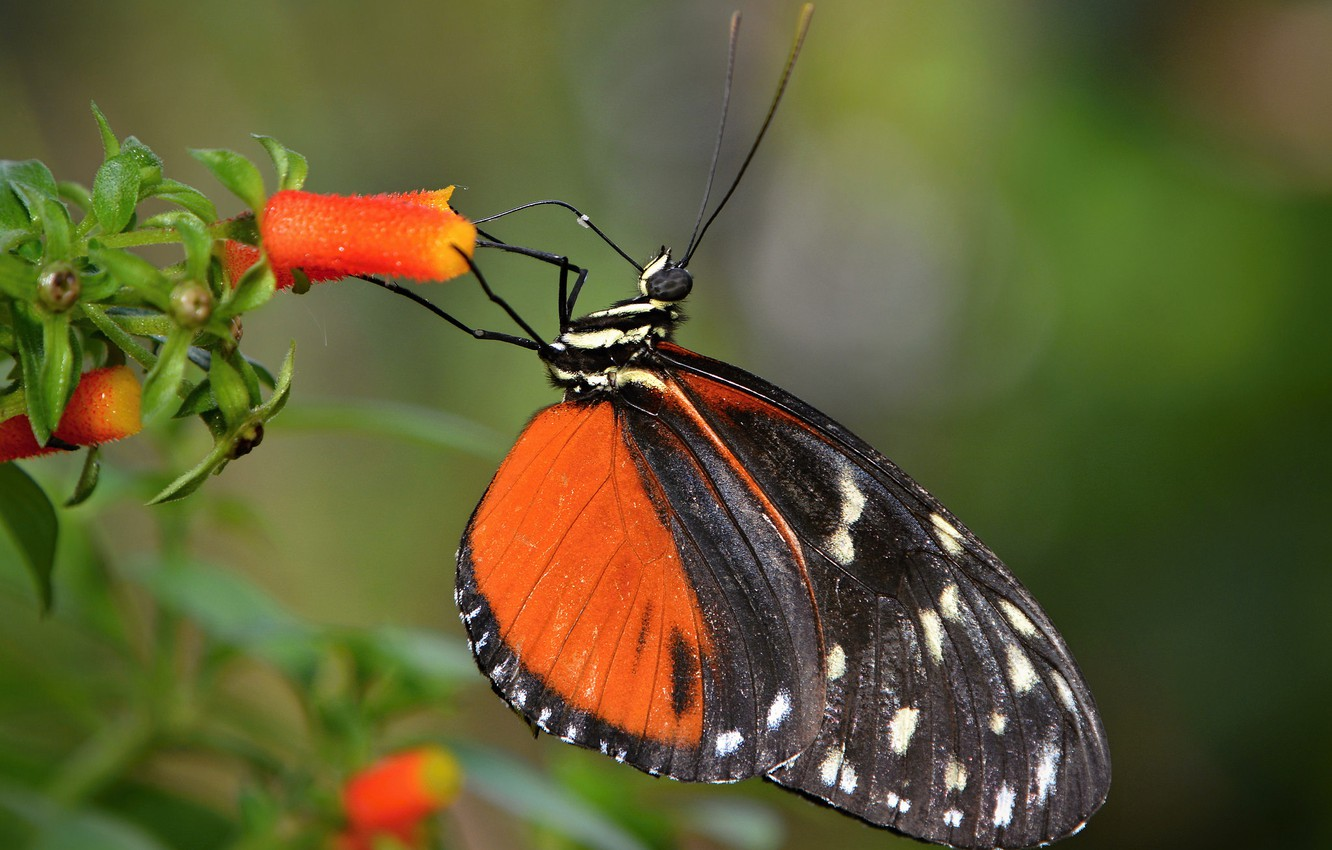 Photo wallpaper flower, butterfly, the p