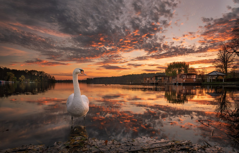 Photo wallpaper autumn, landscape, nature, lake, bird, Marina, the evening, Swan, forest
