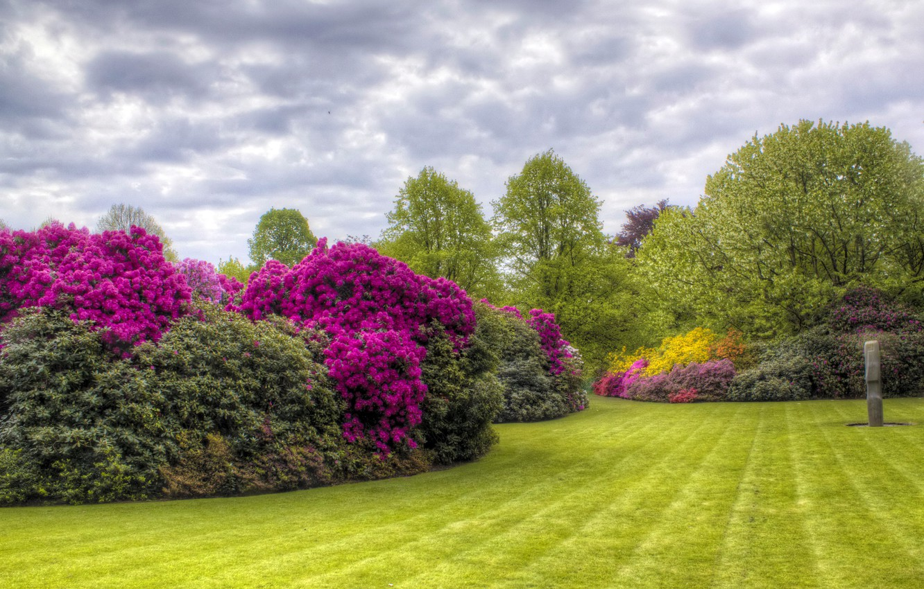Photo wallpaper summer, trees, flowers, HDR, garden, trees, Azalea, Kenwood