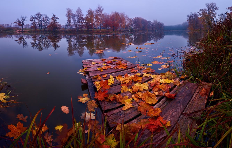 Photo wallpaper autumn, grass, leaves, landscape, nature, lake, mostok, The suburbs, Konstantin Voronov