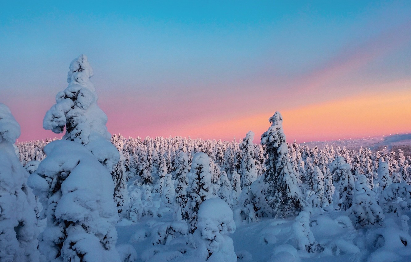 Wallpaper Winter The Sky Clouds Snow Trees Sunset Sky
