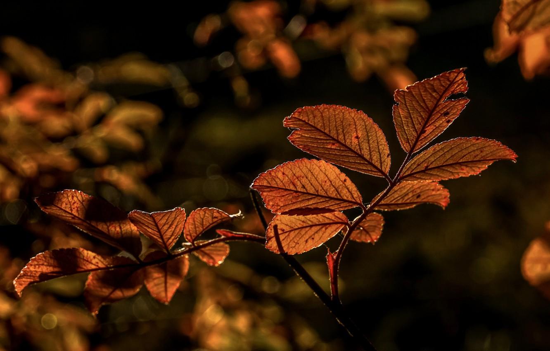 Photo wallpaper autumn, leaves, branches, bokeh