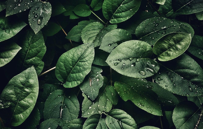 Photo wallpaper Macro, Leaf, Drops, Leaves, Green, Plants, by Sohail Na