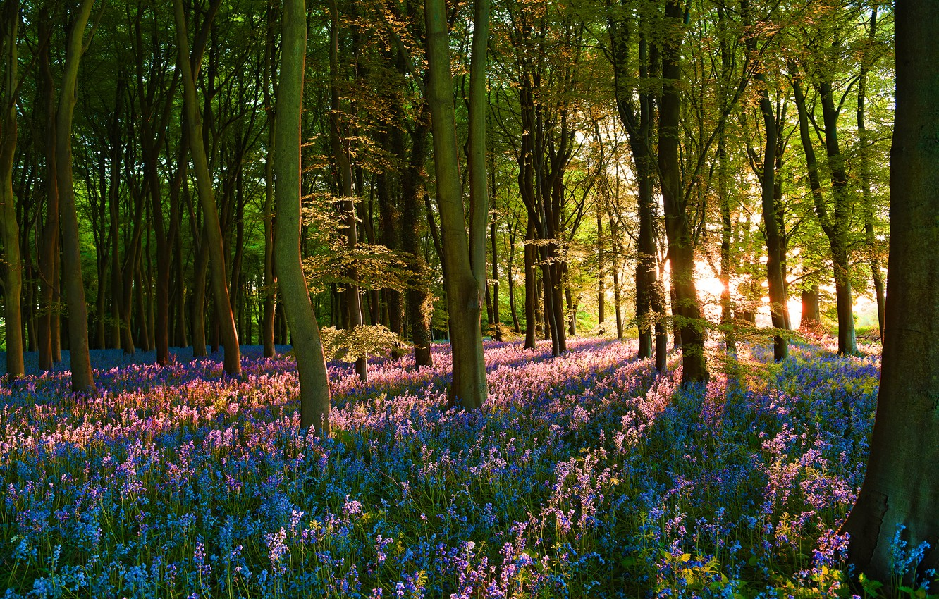 Photo wallpaper forest, the sun, rays, flowers, glade, spring