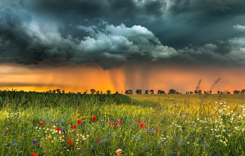 Photo wallpaper field, landscape, flowers, clouds, nature, grass