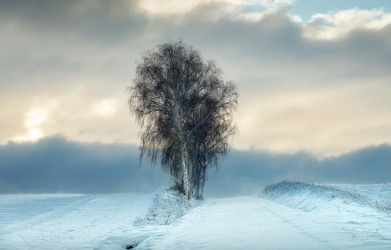 Photo wallpaper winter, snow, tree