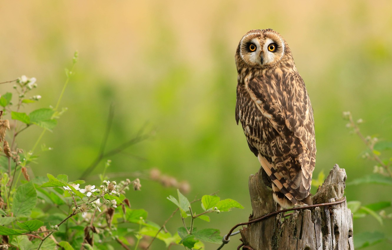Photo wallpaper look, branches, nature, green, background, owl, bird, stump
