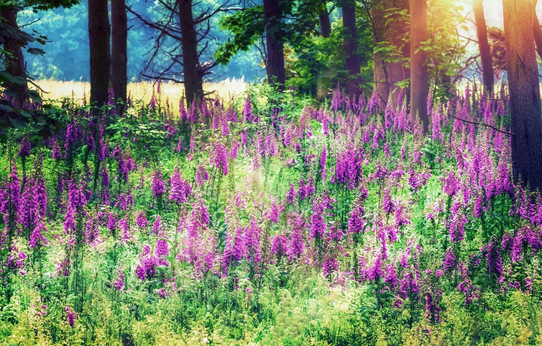 Photo wallpaper summer, light, nature