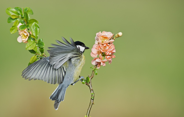 Photo wallpaper flowers, background, bird, branch