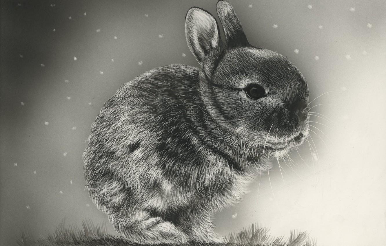 Photo wallpaper background, rabbit, art