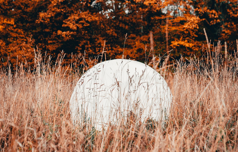 Photo wallpaper autumn, grass, trees, nature, ball