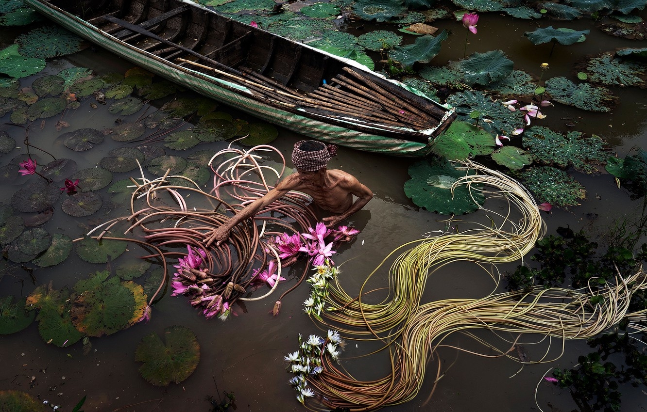 Photo wallpaper lake, boat, male, the collector of lilies