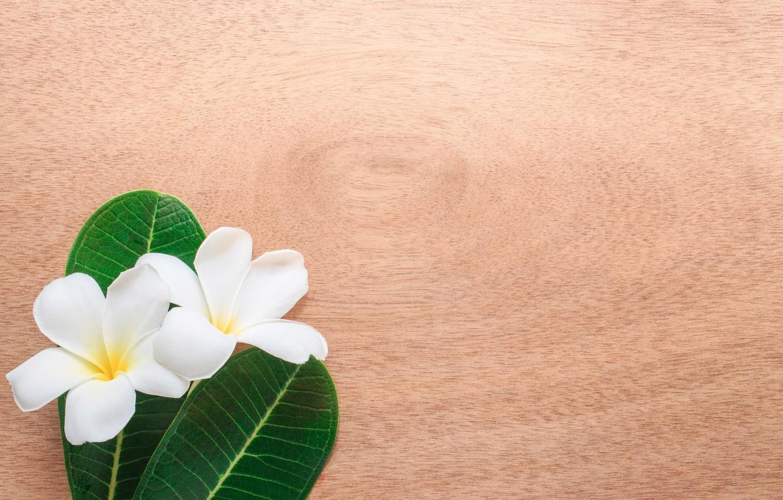 Photo wallpaper leaves, flowers, background, plumeria