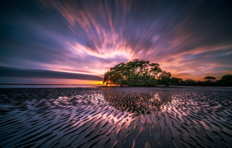 Photo wallpaper sea, landscape, nature, sunrise, tree, dawn, shore, morning, tide