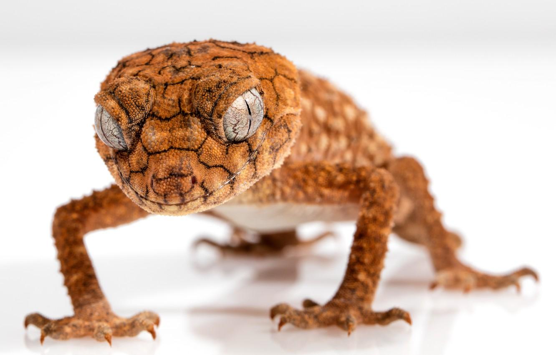 Photo wallpaper lizard, reptile, gecko