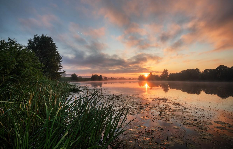 Photo wallpaper summer, grass, trees, landscape, nature, fog, river, dawn, morning, Bank