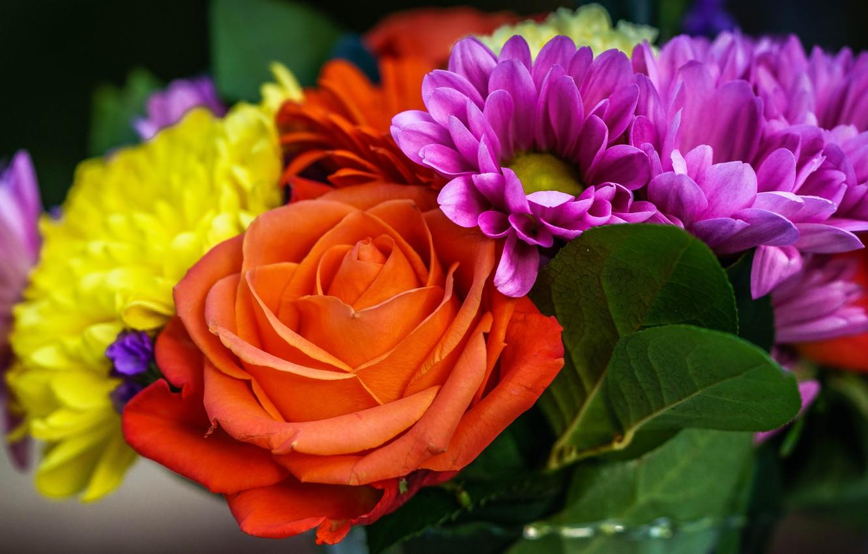 Photo wallpaper flowers, bright, bright, rose, orange, bouquet, yellow, petals, different, lilac, dahlias, trophy plan