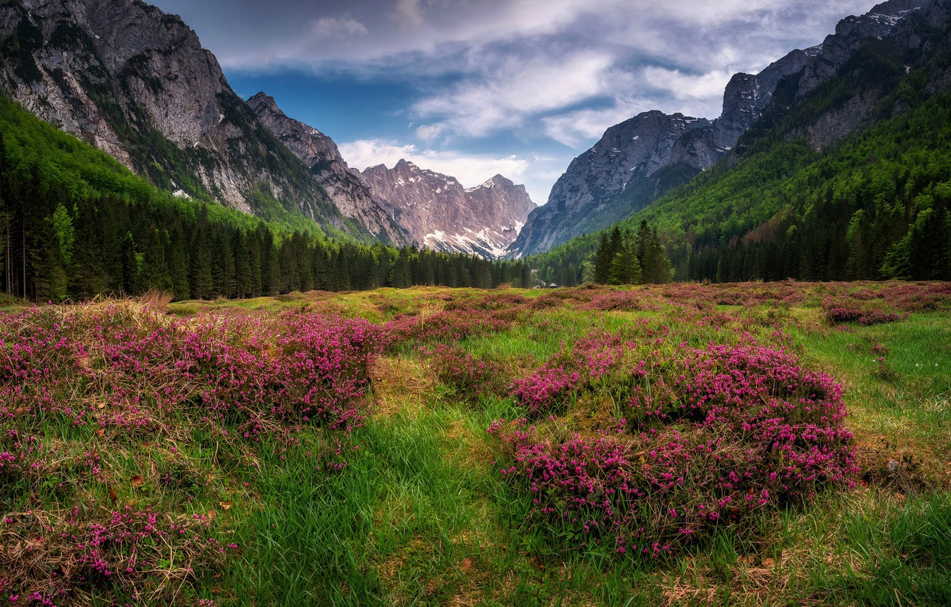Photo wallpaper field, forest, summer, clouds, flowers, mountains, nature, Alps, meadow, bushes, The Dolomites