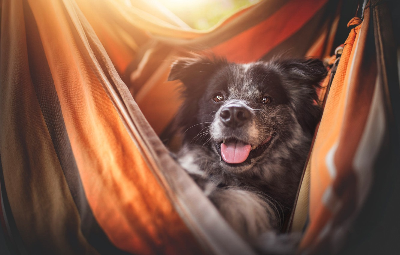 Photo wallpaper language, look, face, light, smile, comfort, stay, portrait, dog, hammock, fabric, happy