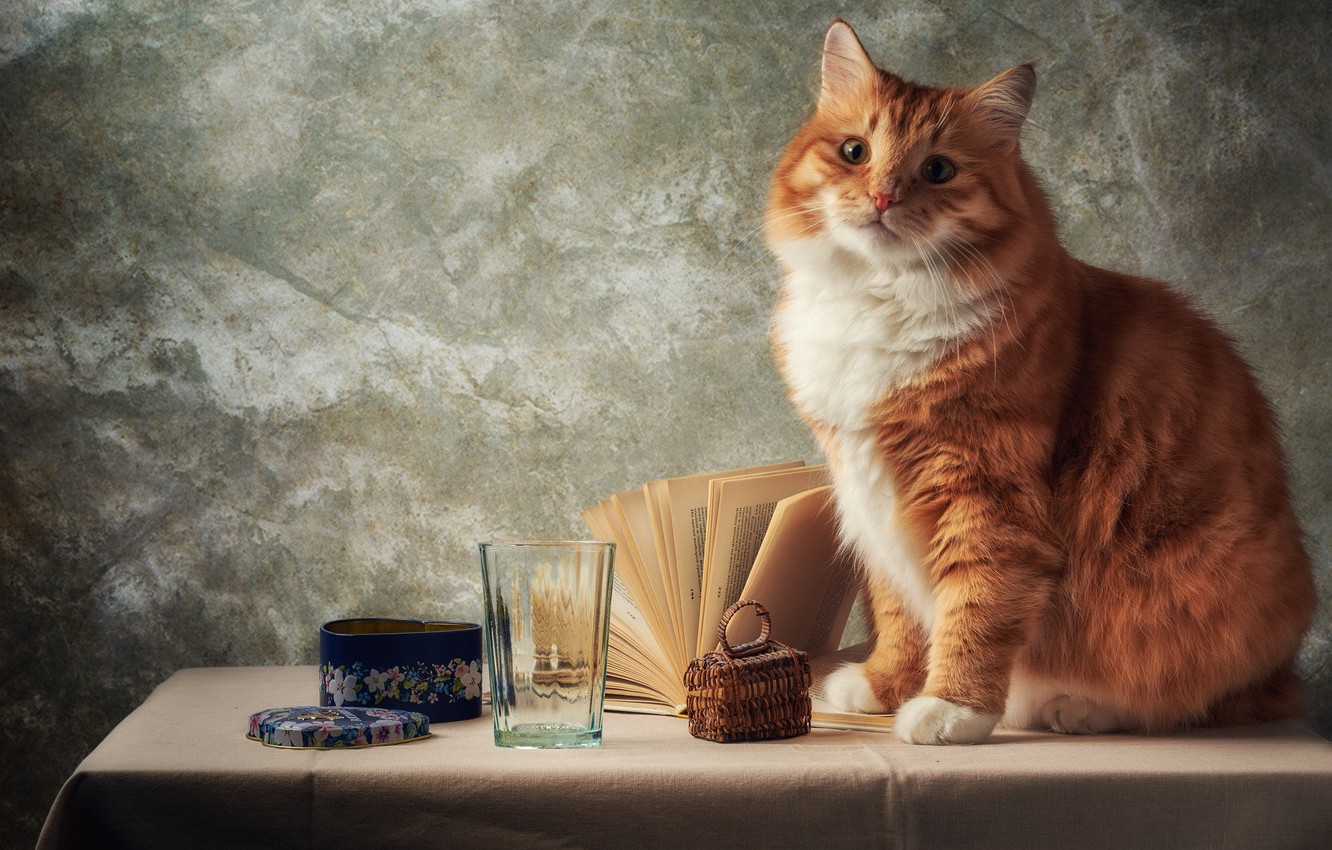 Photo wallpaper cat, cat, look, face, glass, pose, table, grey, background, wall, portrait, red, box, book, still …