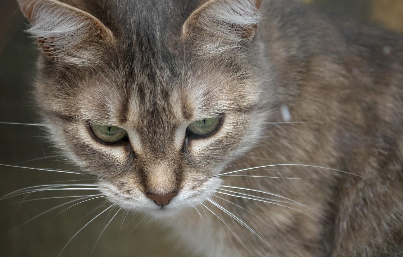 Photo wallpaper cat, mustache, look