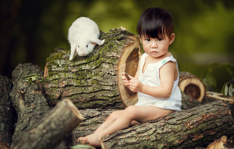 Photo wallpaper animal, rabbit, baby, child, logs, Marianne Smolin