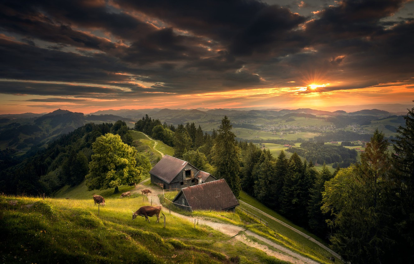 Photo wallpaper forest, the sky, sunset, hills, Switzerland, cows, meadow, the view from the top
