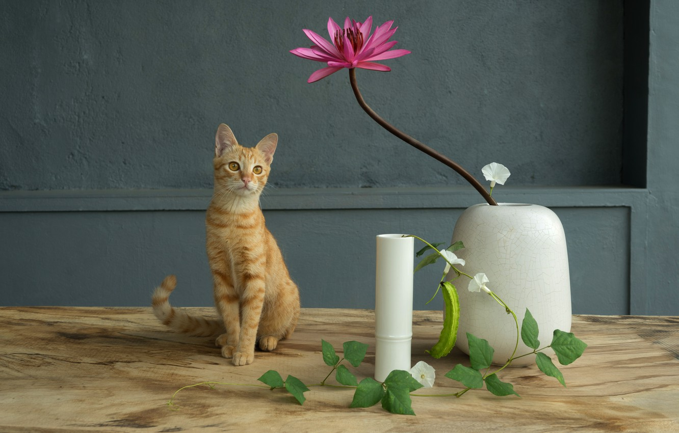 Photo wallpaper cat, flower, cat, flowers, table, wall, pink, red, wooden, white, vase, still life, grey background, …