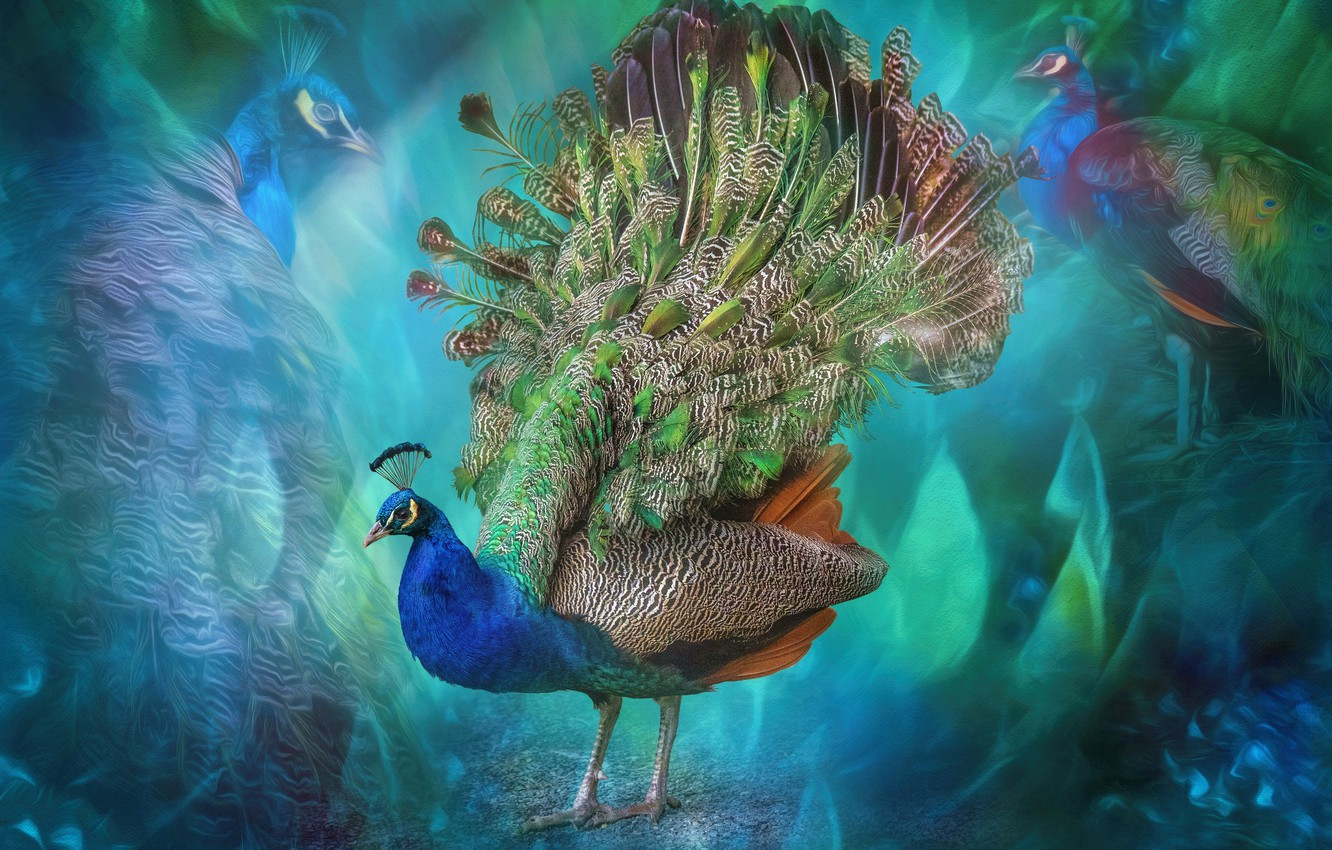 Photo wallpaper abstraction, bird, feathers, tail, peacock