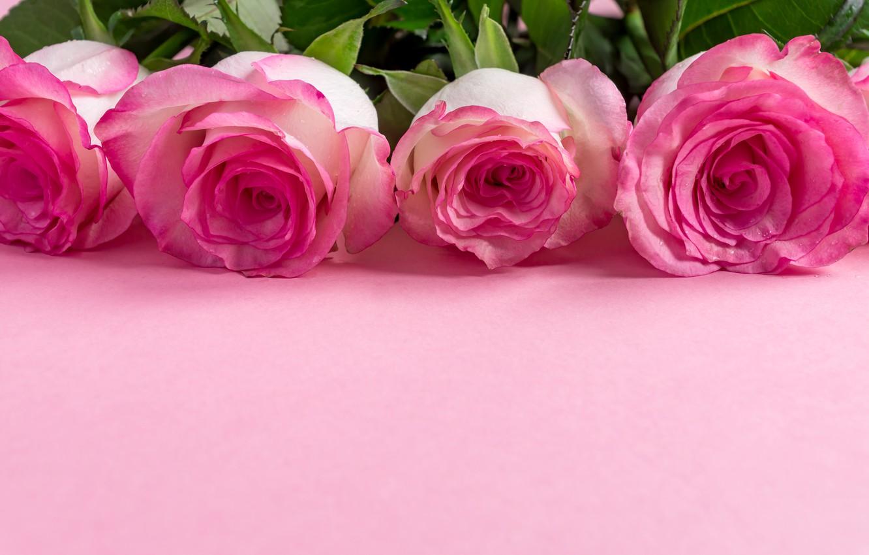 Photo wallpaper flowers, Rose, Pink