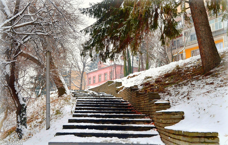 Photo wallpaper Winter, Snow, Park, Winter, Park, Snow