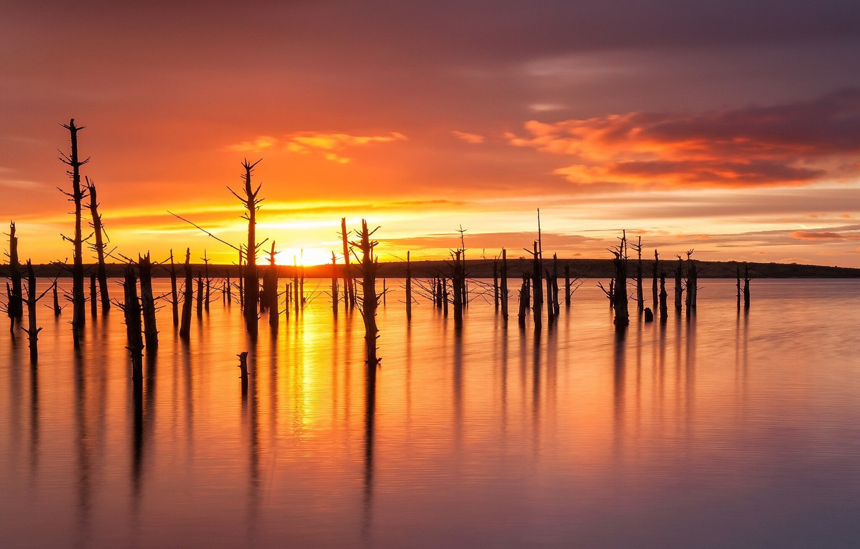 Photo wallpaper trees, sunset, lake