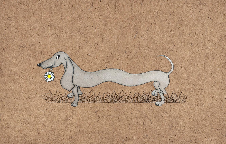 Photo wallpaper figure, dog, Dachshund