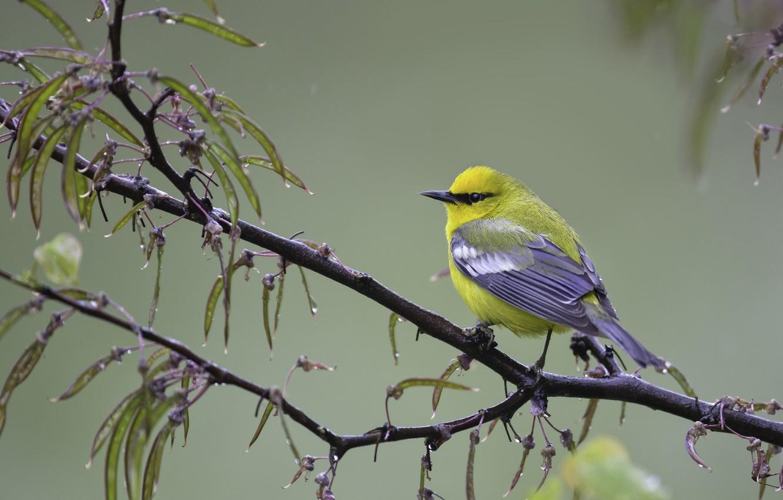 Photo wallpaper branch, bird, baby