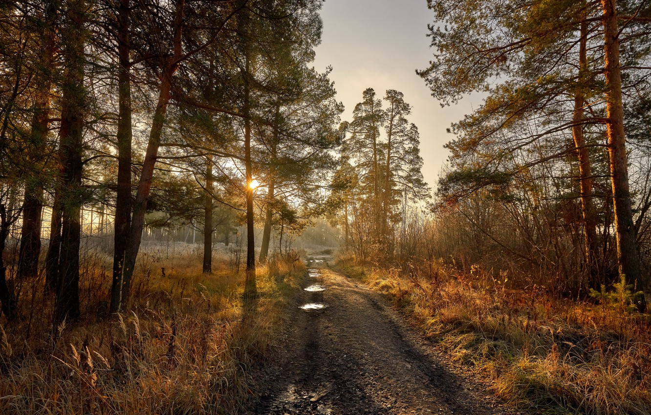 Photo wallpaper road, forest, morning