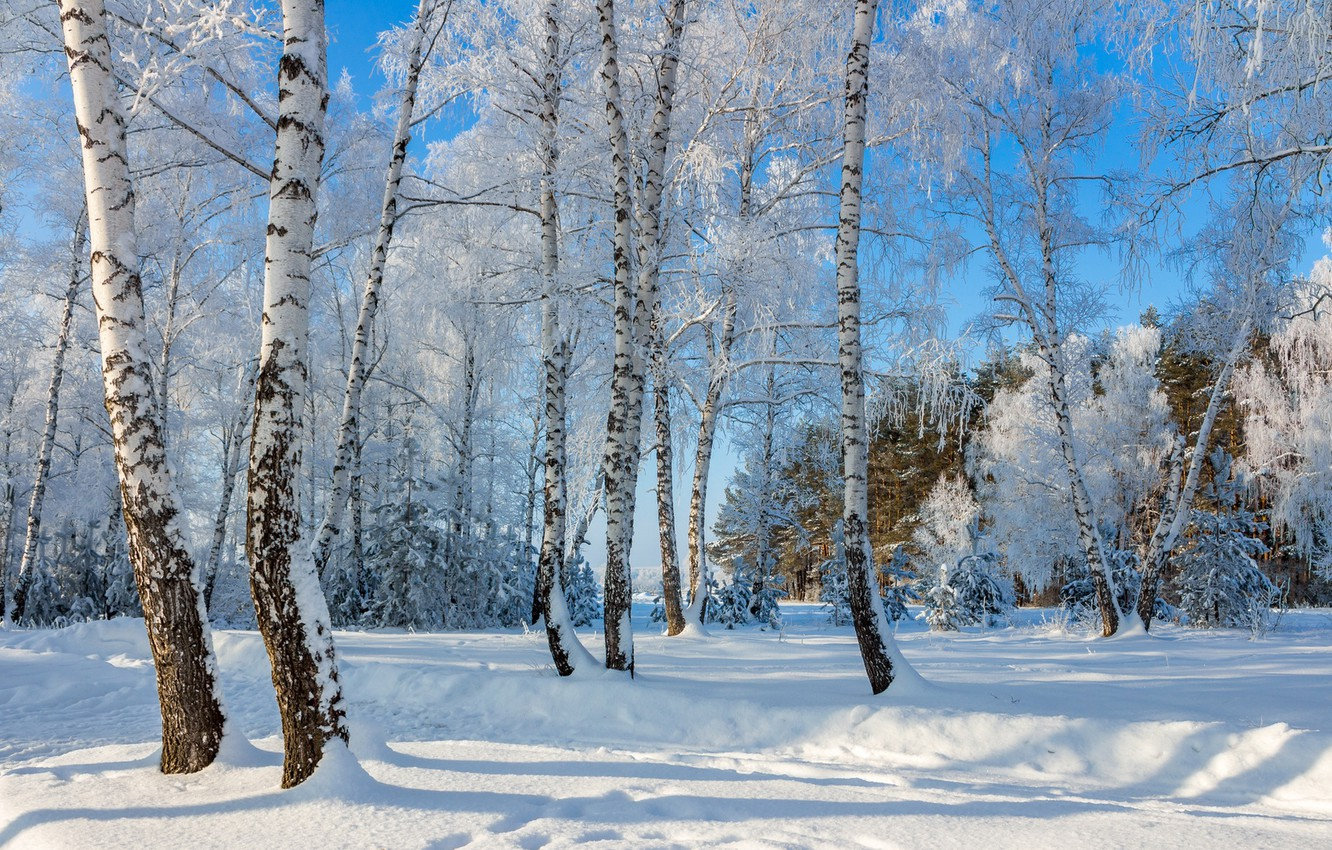 Photo wallpaper snow, birch, a wonderful day, frost and sun