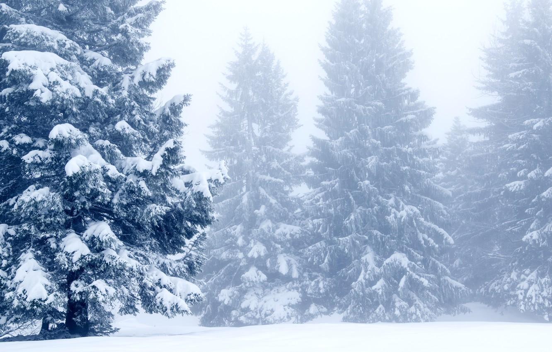 Photo wallpaper winter, snow, trees, landscape, winter, tree, landscape, nature, beautiful, winter, snow, fir tree