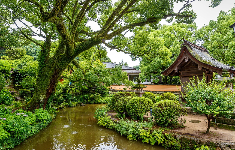 Photo wallpaper greens, trees, design, pond, Park, Singapore, the bushes