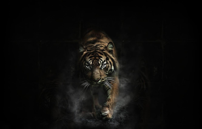 Photo wallpaper Dark, Tiger, Animal